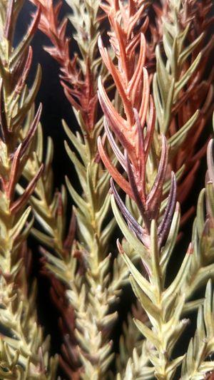 Plantlife Plants Nature Sofreakinpretty