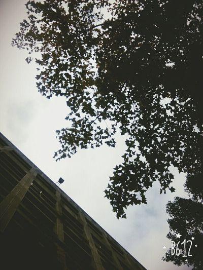 Tree Morning Sky Relax