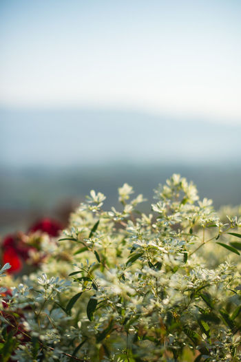 Nature Beauty In Nature No People Plant Day Growth Selective Focus Close-up Flower Land Tranquility Focus On Foreground Scenics - Nature Outdoors Green Color Sky Flowering Plant