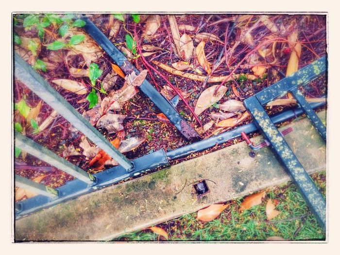 Broken Rusty Leaf High Angle View Day Plant Outdoors Autumn Nature Growth No People Low Section Close-up EyeEmNewHere