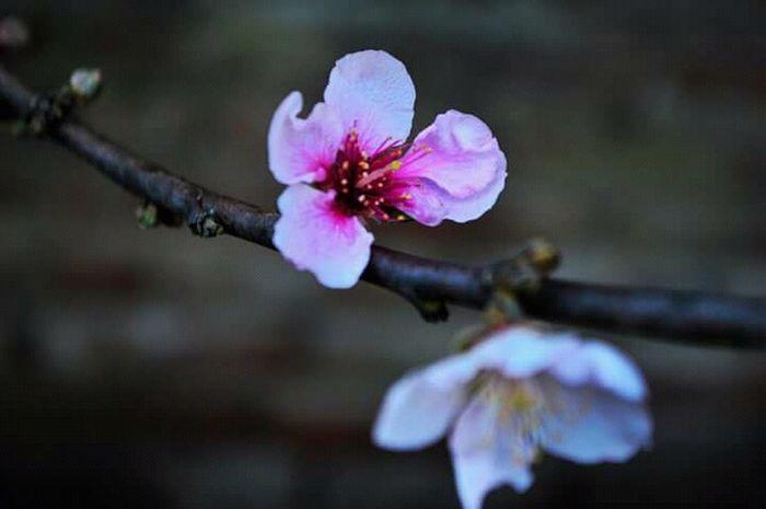 Flower Flowers,Plants & Garden Flower Photography Natulareza Flores