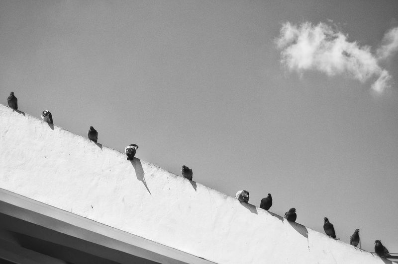 Low angle view of pigeons on building terrace against sky