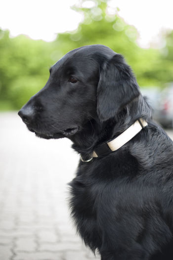 Close-up of black dog outdoors