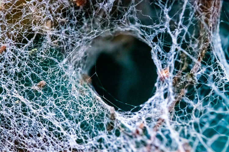 Close-up of spider web on window