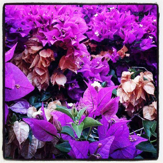 Goodmorning Bondia Buenosdias Hejhej Mallorca flower igersmallorca