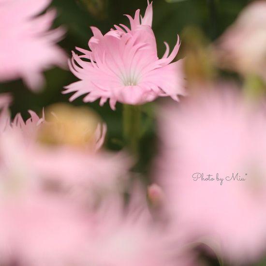 Canon70d Flowers
