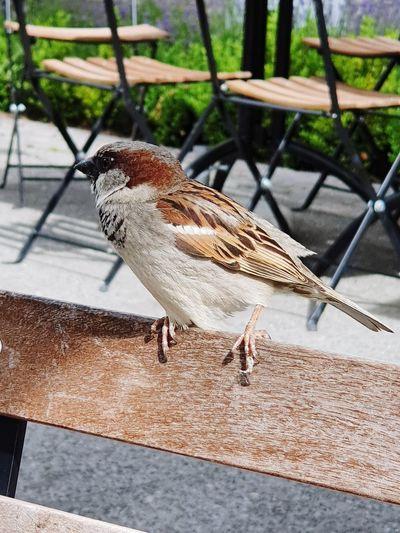 birdie Bird