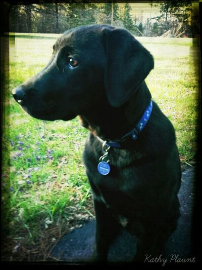 Ruger at 5 months Pets Puppies My Dogs Are Cooler Than Your Kids