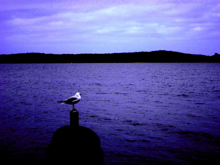 Animal Themes Animals In The Wild Australia Beauty In Nature Bird Day Lake Lake Macquarie Lake Macquarie Nature New South Wales  No People One Animal Outdoors Perching Scenics Sky Sunset Sunshine ☀ Tranquil Scene Tranquility Water