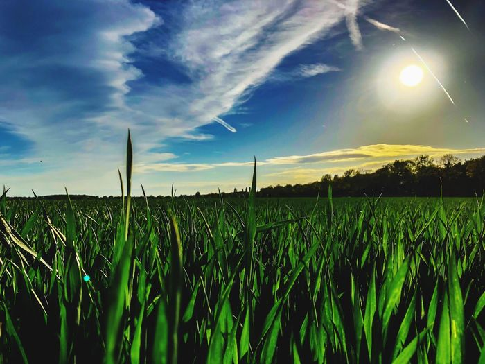 Nature Sky Growth Field Landscape Cloud - Sky Agriculture Plant Land Crop  Rural Scene Tranquil Scene Environment Beauty In Nature Scenics - Nature Nature Tranquility Green Color No People Farm Sunlight