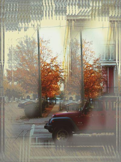 Fall Colors ???