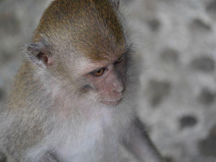 Young monkey,
