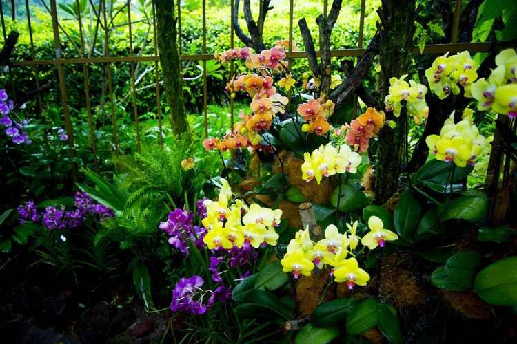 National Orchid Garden Singapore City National Orchid Garden Orchid Garden Garden Orchid