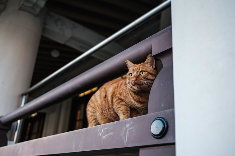 Portrait of cat sitting on railing