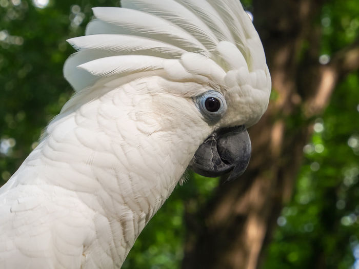 Clara the cockatoo Cockatoo Feathers Animal Themes Beak Bird Close-up Cockatoo Crest Day Domestic Animals Exotic Pets Focus On Foreground Leafy No People One Animal Outdoors Parrot Pets Portrait White Color
