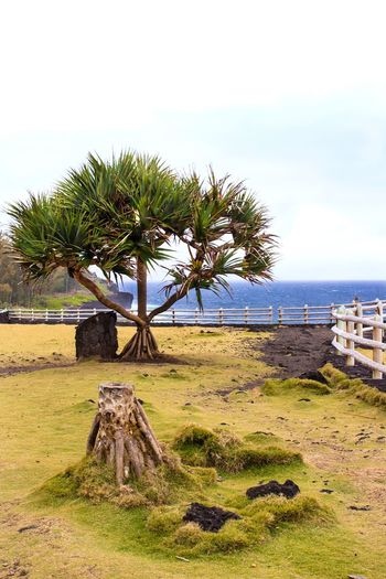 Réunion Tree Palm Tree No People Sky Nature Sea Scenics Day Outdoors Tranquility Grass Tranquil Scene Water Île De La Réunion  Horizon Over Water Growth Landscape Beach EyeEmNewHere
