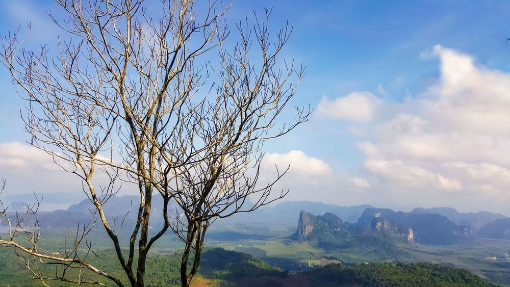 Dead tree on the hill top with beautiful view. Dead Tree Hill Top Topview Tropical Climate Panorama Krabi Nature Mountain Beauty In Nature Sky Tree Outdoors Cloud - Sky No People Landscape Day Freshness