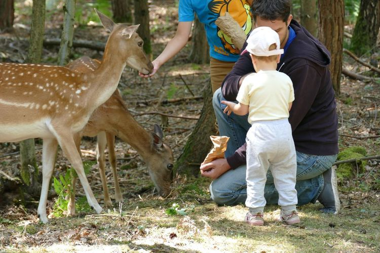 Family Activity Animal Themes Animals In The Wild Animals With Children Baby With Animals Baby With Deer Baby With Father Child With Dee Children & Animals Dad And Son Darkness And Light Day Deer Famille Familly Time Family❤ Father & Son Feeding Animals Feeding Deers Friendship Togetherness Second Acts