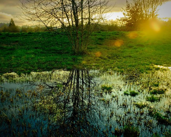sunset in West Eugene Green Tree Sunset Agriculture Field Reflection Sky Grass Landscape