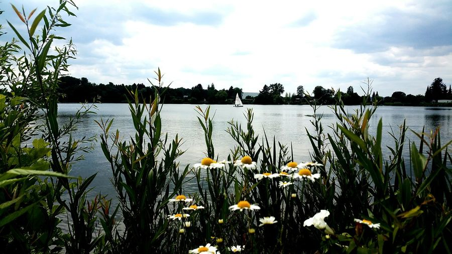 wonderfull cycling tour around the lake Lake View Lakesideview Nature_collection Nature Photography Without People Nice Atmosphere Sailing Boat Nature Natural Beauty Silence Of Nature Flower Water Flower Head Lake Sky Plant Cloud - Sky Botany In Bloom