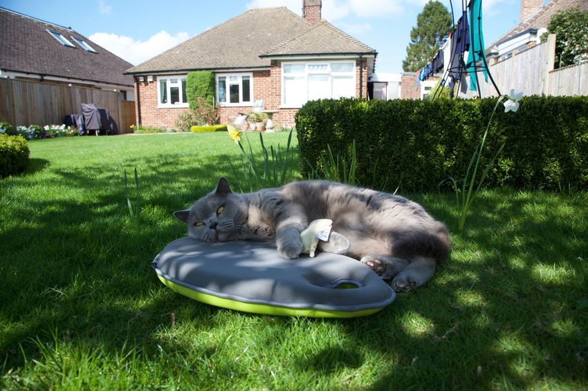 British Blue British Blue Short Hair.cats Cat Chilling EyeEm Cats Relaxing Relaxing In The Shade - Cool Cat Shady Cat Tough Life Being A Cat??