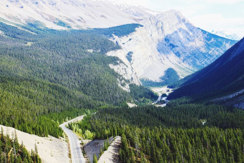 Jasper National Park Alberta Canada Canada150 Mountain Mountain Range Nature Forest Scenics Tree Landscape Highway