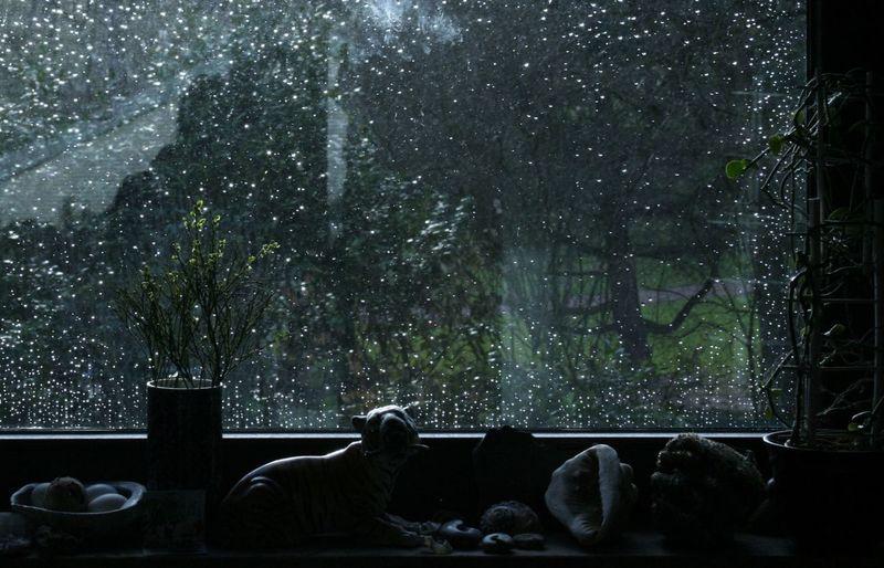 Rainy Day Through The Window Screen. Rain RainDrop Rainiy Day Regentropfen Regnerischer Tag Tropfenfotografie Tropfen Wie Perlen Drops Of Water