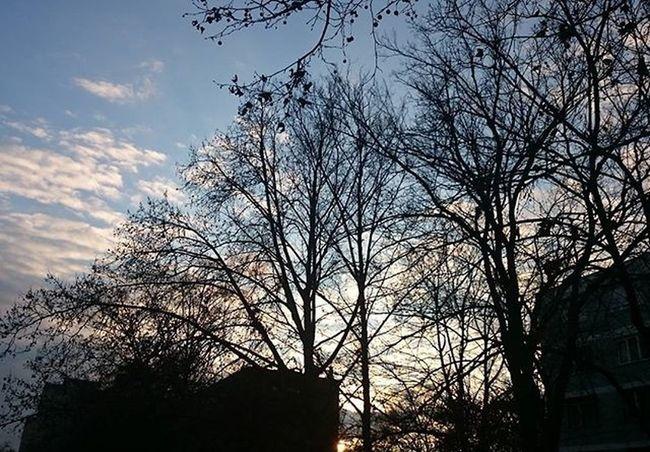 Fa Agak Tree EG Sky Skyphoto Skyphotos Skyphotography Naturephotography Nature Naturephotograph Naturephoto Ilovenature Naturelovers Természet Természetfoto Magyar Instahun Hungary Nofilter Nofilterneeded Koponyeg