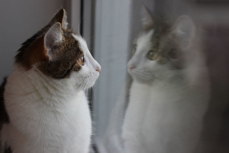 Animal Head  Animal Themes Cat Close-up Domestic Animals Domestic Cat Focus On Foreground Looking Away One Animal Pets Relaxation