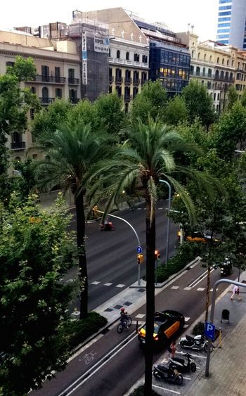 Streets of Barcelona 🌴 a view from my Interrail trip 🌵♥️ Barcelona SPAIN Streetsofbarcelona Avinguda Diagonal Palm Tree Taxi Vespa Bicycle Architecture Breakfast View View From Above City Built Structure Street Transportation Travel Destinations Cityscape Stories From The City