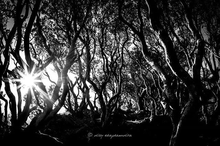 Dancing trees Trees Nature Gedemountain Westjava INDONESIA 1000kata Natgeotravel Asiangeographic Blackandwhite Instalike Instagram Instagood Photooftheday Wonderfulindonesia BeautifulIndonesia Indonesiaplayground