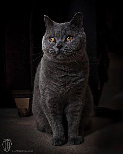 Cats Cute Pets Portrait Strobist
