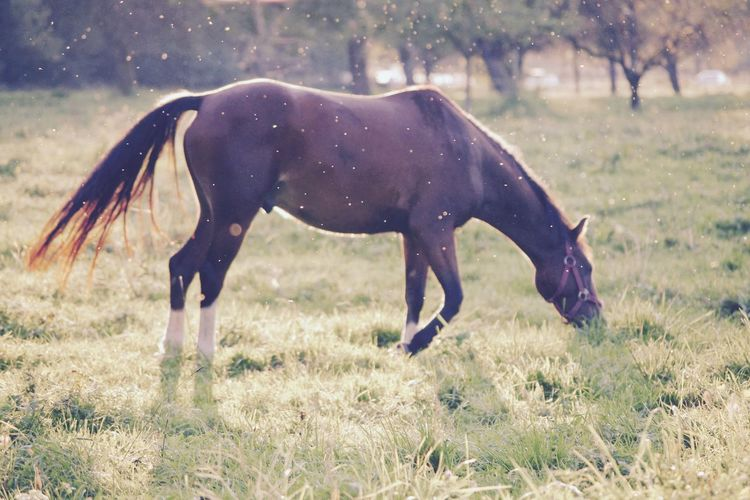 Animal Themes Full Length Nature One Animal Grass Mammal Field Growth No People Outdoors Domestic Animals Day Horse Grazing Backlight Backlit