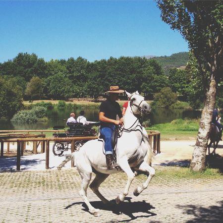 Horse Taking Photos Taking Pictures Photography Photo Eye4photography  Photooftheday Walking Around Enjoying Life Enjoying The Sun