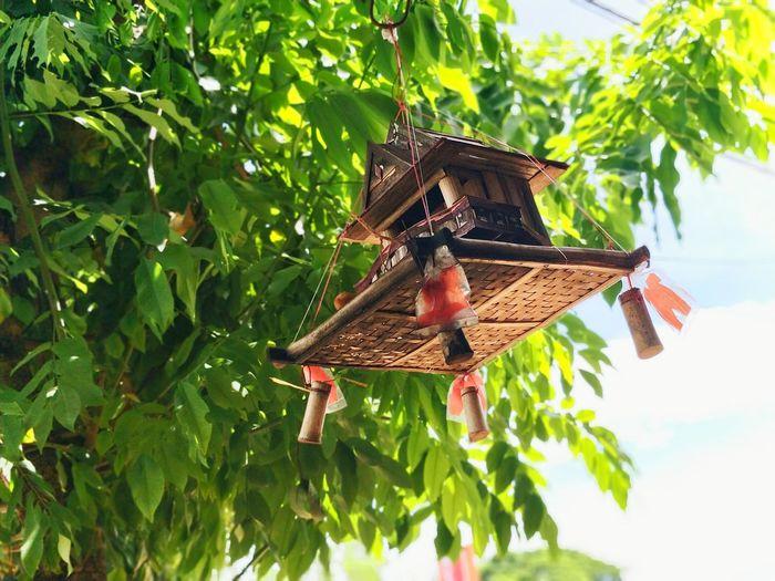 Tree Leaf House Fly Homeland Sky First Eyeem Photo Cambodia Kompong Speu