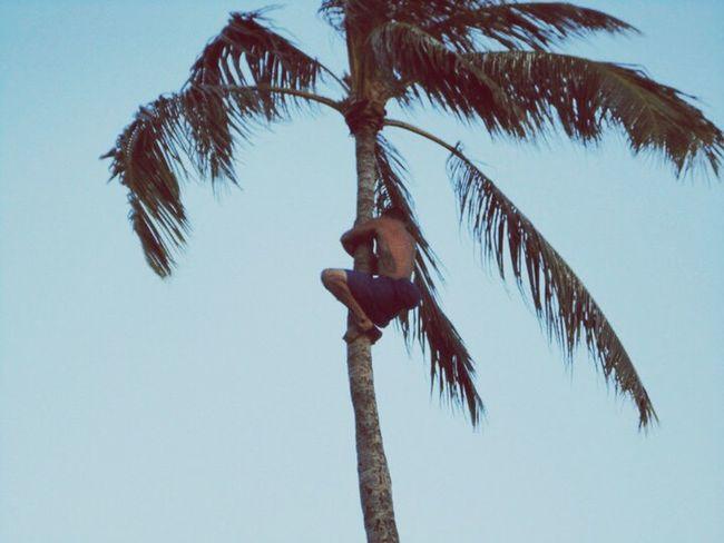 Man Palm Trees