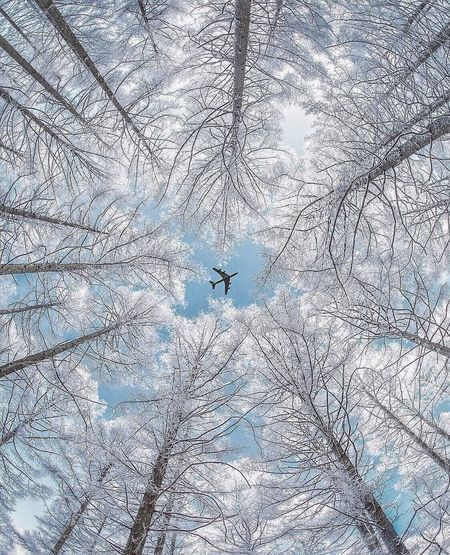 Low angle view of bird on snow covered landscape