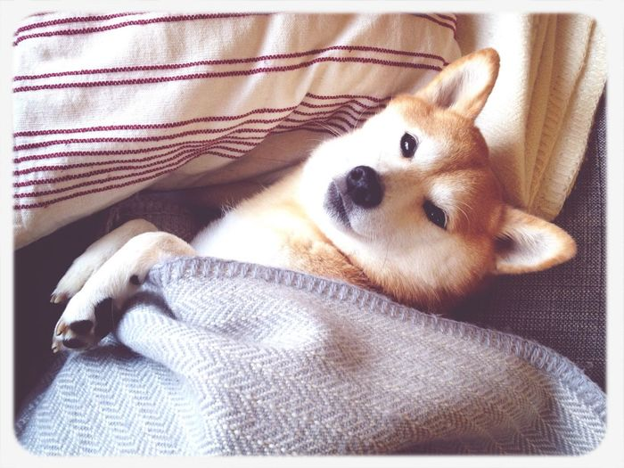 First Eyeem Photo Dog Shiba Inu Karintou