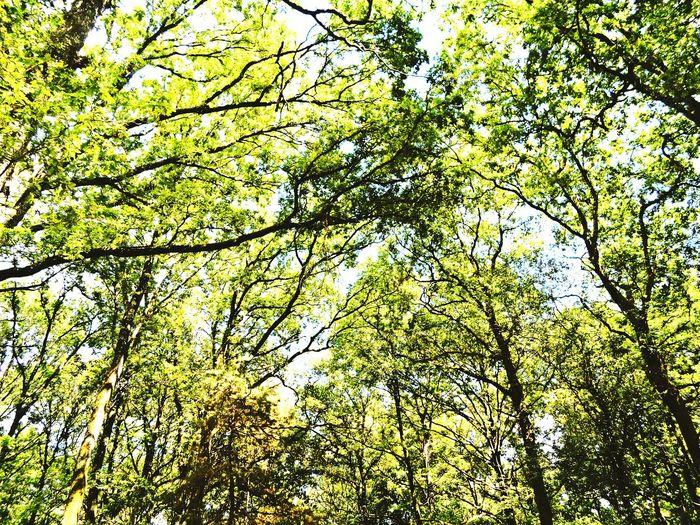 Spiritualité SilléLeGuillaume Meditation Arbre Tree Nature Namaste Foret France