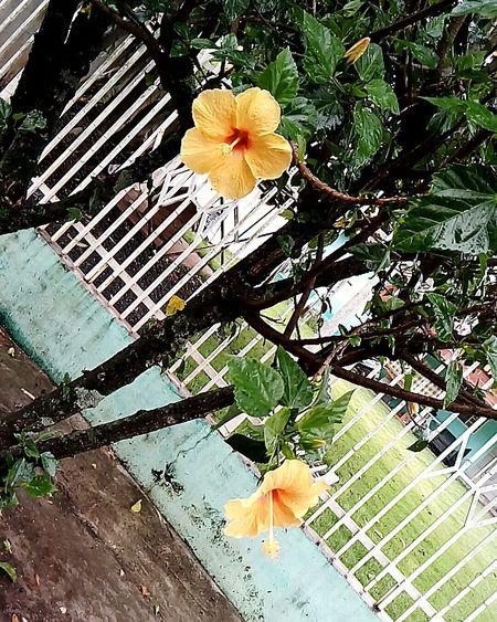 Flowers !!! !!!♥♥
