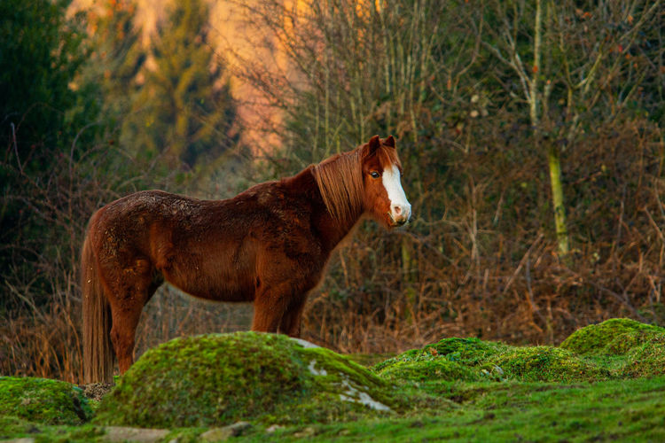Side view of a horse in the forest