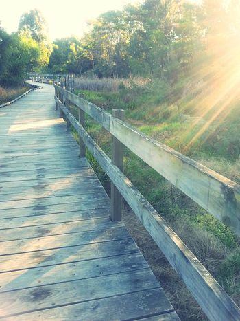 Afternoonwalk Last Rays Of Sunlight Nofilter