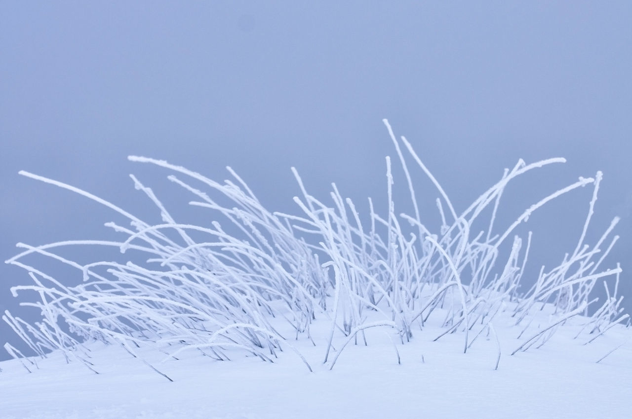 SNOW COVERED PLANTS AGAINST SKY