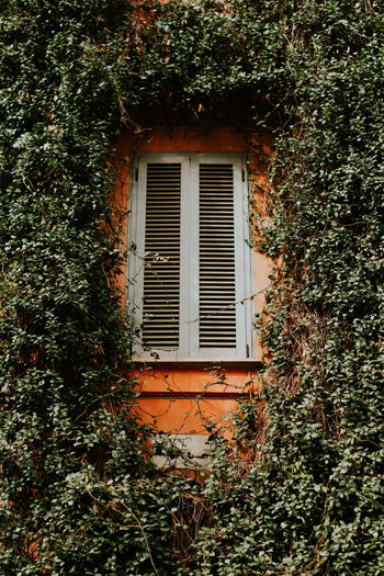 Italy South Green Color Postcard Rustic Rome Backgrounds Greens Pool Window Architecture Built Structure Building Exterior Plant Building No People Day Tree Ivy Nature Growth Outdoors House Closed Creeper Plant Wall - Building Feature Wall Residential District