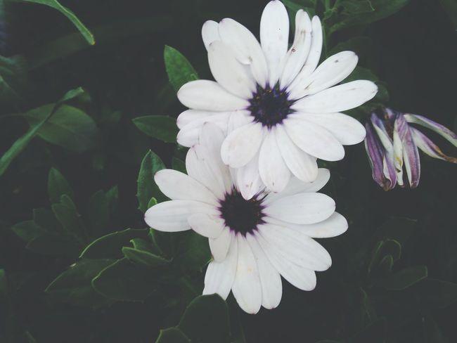 Flowers 🍃🌼🌸
