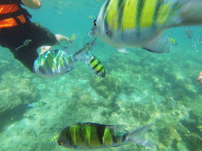 Plenty Of Fish In The Sea  Krabi Thailand Enjoy To The Fulles