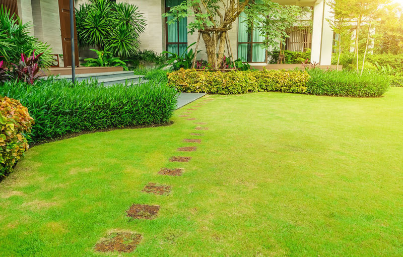 Grass growing in garden