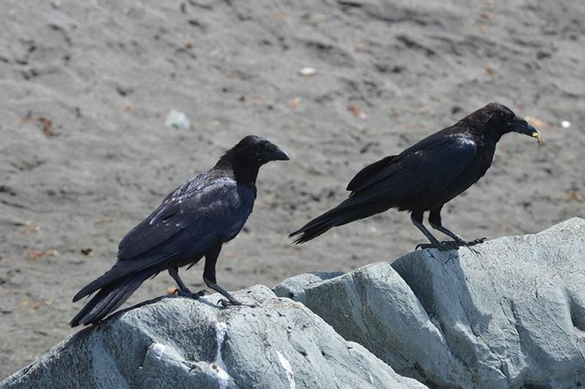 Bird Animal Themes Animal Wildlife Animal Animals In The Wild Vertebrate Group Of Animals