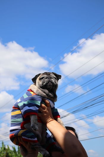 Low angle view of dog holding small against sky