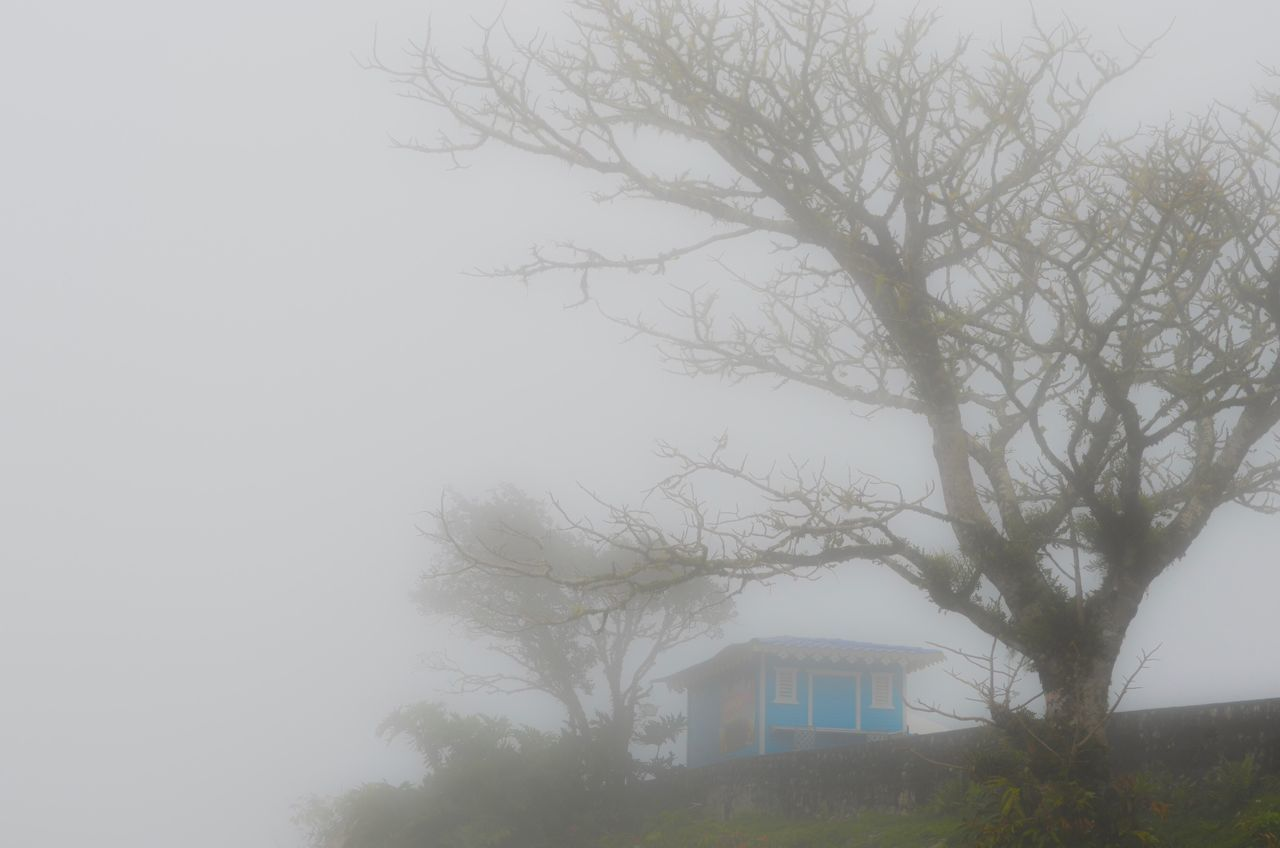 building exterior, architecture, built structure, tree, fog, house, foggy, outdoors, no people, nature, bare tree, day, residential building, beauty in nature, sky